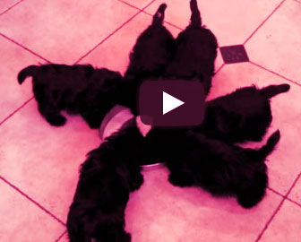 six little puppies forming a pinwheel: so cute!